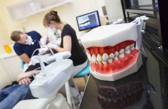 Know what to look for in a dental service before hiring